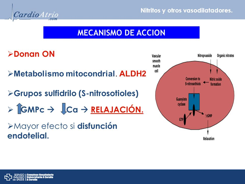 Nitritos y otros vasodilatadores. MECANISMO DE ACCION Donan ON Metabolismo mitocondrial. ALDH2 Grupos sulfidrilo (S-nitrosotioles) GMPc Ca RELAJACIÓN.
