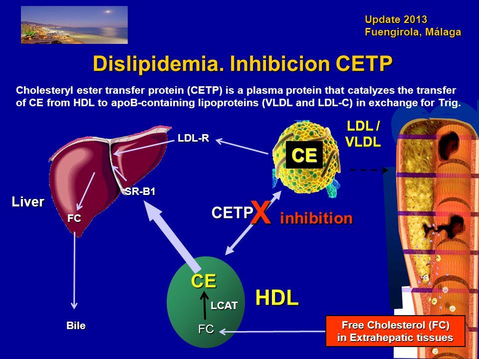 Update 2013 Fuengirola, Málaga Dislipidemia. Inhibicion CETP HDL LDL / VLDL Liver Bile CE LDL-R FC FC LCAT CETP CE SR-B1 X inhibition Cholesteryl este