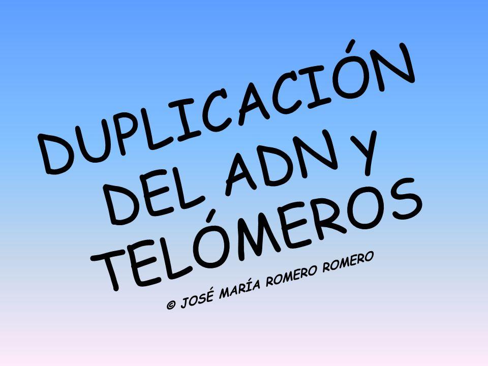 DUPLICACIÓN DEL ADN y TELÓMEROS © JOSÉ MARÍA ROMERO ROMERO