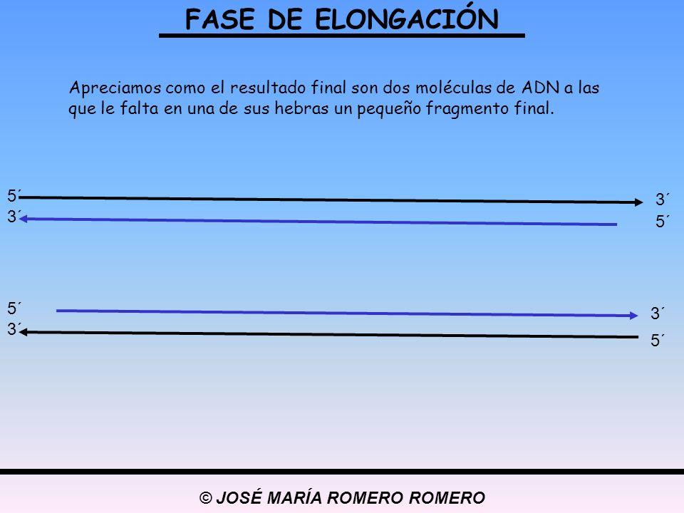 © JOSÉ MARÍA ROMERO ROMERO FASE DE ELONGACIÓN 5´ 3´ 5´ 3´ 5´ 3´ 5´ 3´ Apreciamos como el resultado final son dos moléculas de ADN a las que le falta e