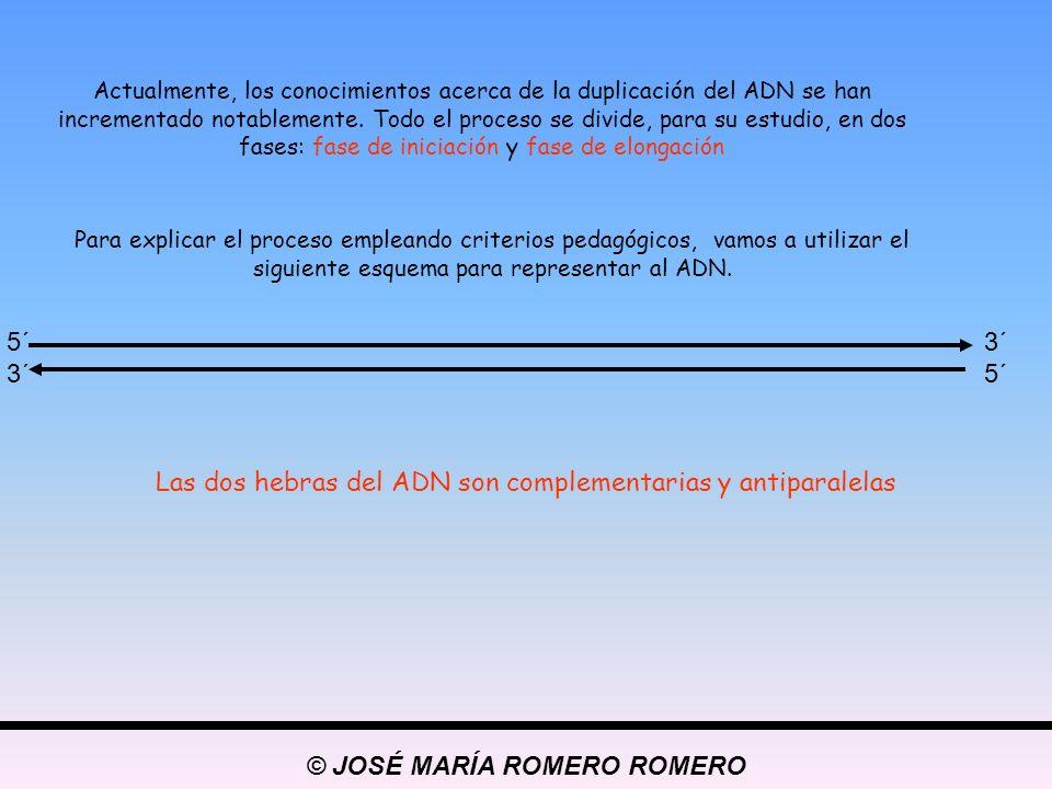 © JOSÉ MARÍA ROMERO ROMERO 5´ 3´ Las dos hebras del ADN son complementarias y antiparalelas Actualmente, los conocimientos acerca de la duplicación de