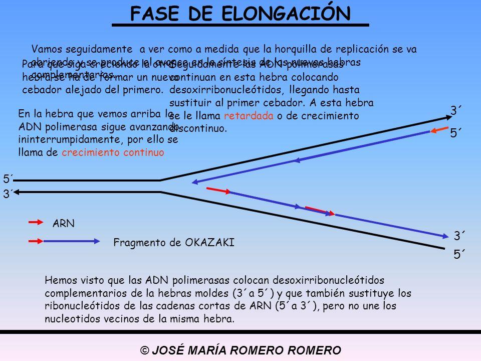 © JOSÉ MARÍA ROMERO ROMERO Para que los nucleótidos de la hebra de crecimiento discontinuo tengan continuidad hace falta la acción de un enzima llamado LIGASA.