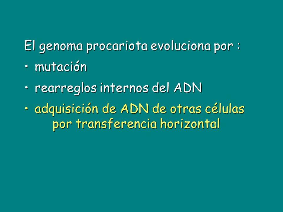 El genoma procariota evoluciona por : mutaciónmutación rearreglos internos del ADNrearreglos internos del ADN adquisición de ADN de otras células por