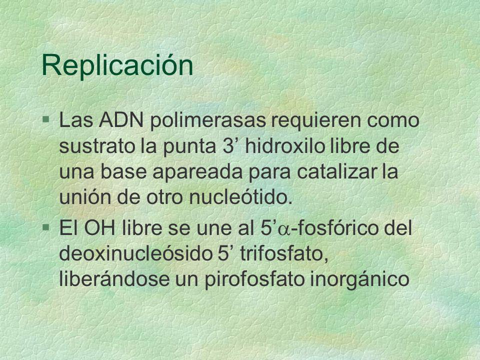 Replicación §Las ADN polimerasas requieren como sustrato la punta 3 hidroxilo libre de una base apareada para catalizar la unión de otro nucleótido. E