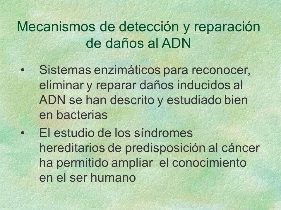 Mecanismos de detección y reparación de daños al ADN Sistemas enzimáticos para reconocer, eliminar y reparar daños inducidos al ADN se han descrito y
