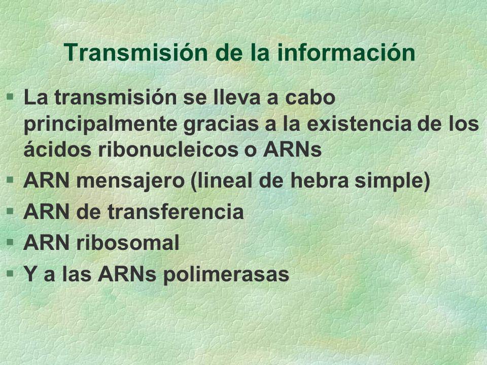 Transmisión de la información §La transmisión se lleva a cabo principalmente gracias a la existencia de los ácidos ribonucleicos o ARNs §ARN mensajero