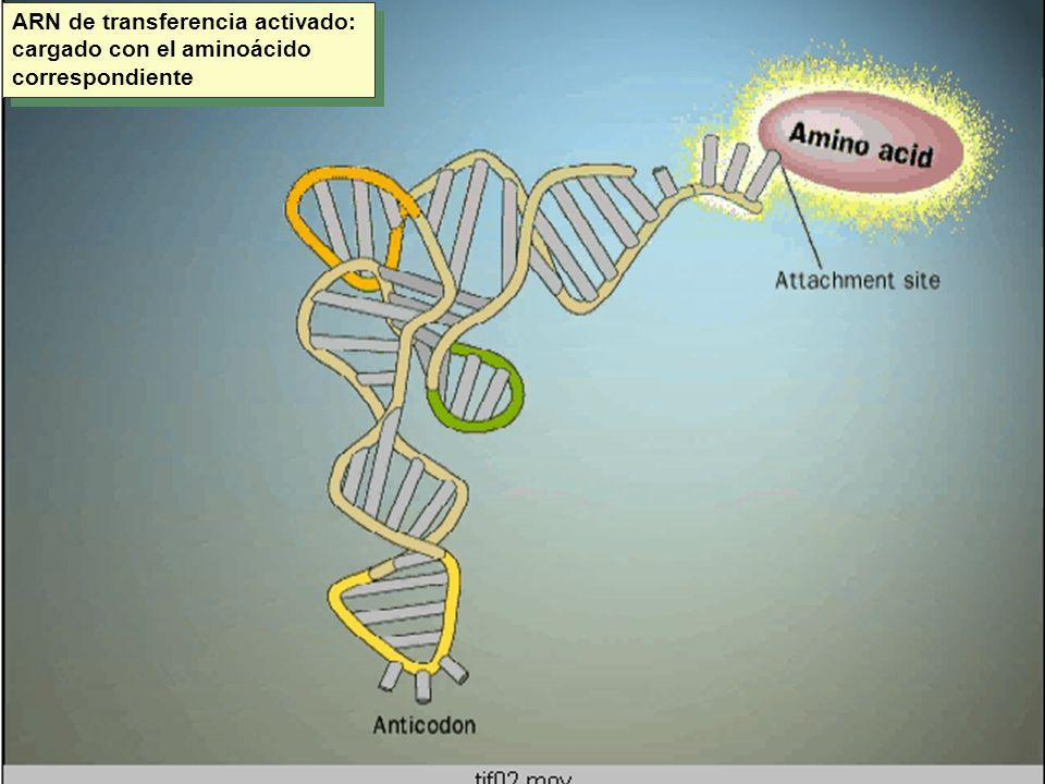 CODIGO GENETICO ARNm