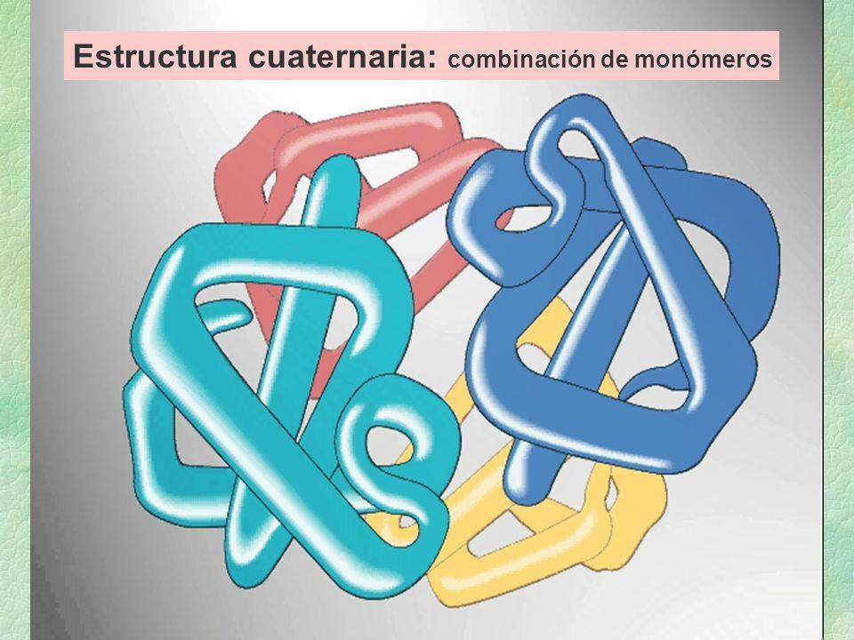 Estructura cuaternaria: combinación de monómeros