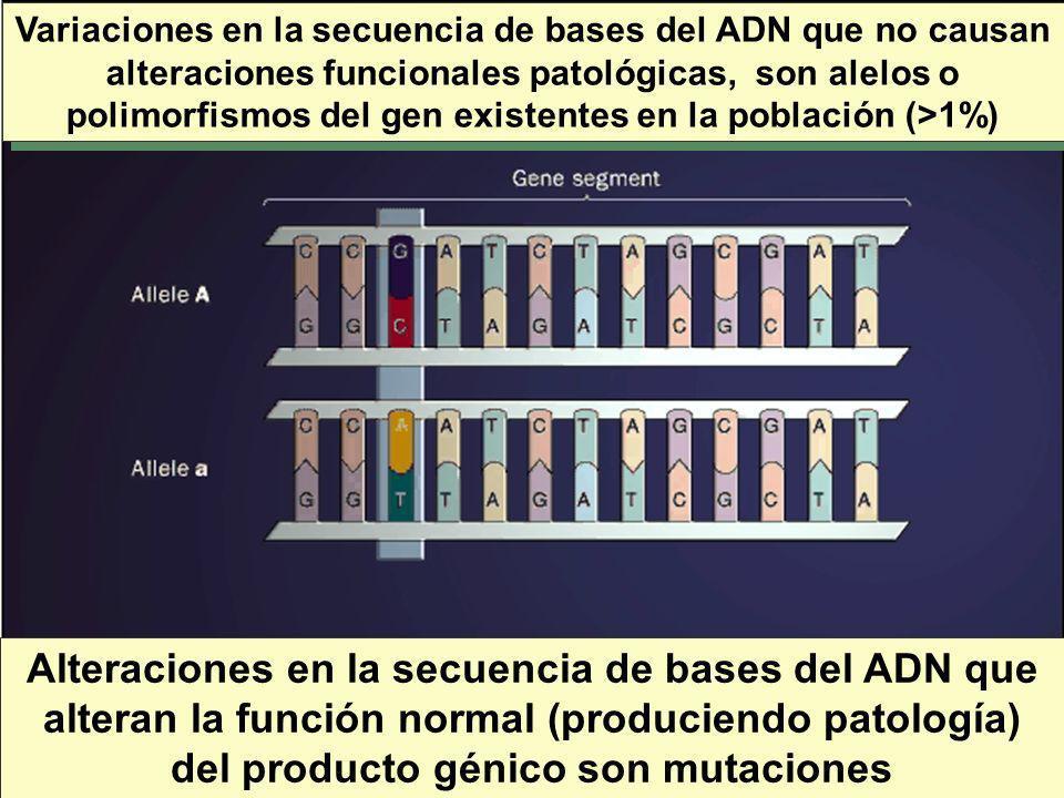Variaciones en la secuencia de bases del ADN que no causan alteraciones funcionales patológicas, son alelos o polimorfismos del gen existentes en la p