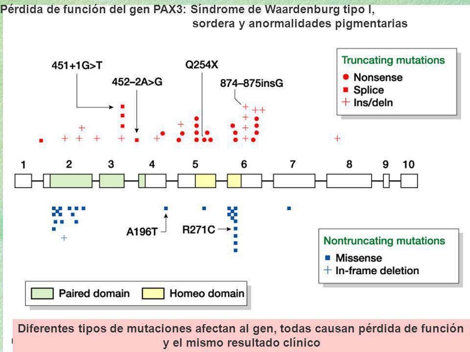 16_01.jpg Pérdida de función del gen PAX3: Síndrome de Waardenburg tipo I, sordera y anormalidades pigmentarias Diferentes tipos de mutaciones afectan