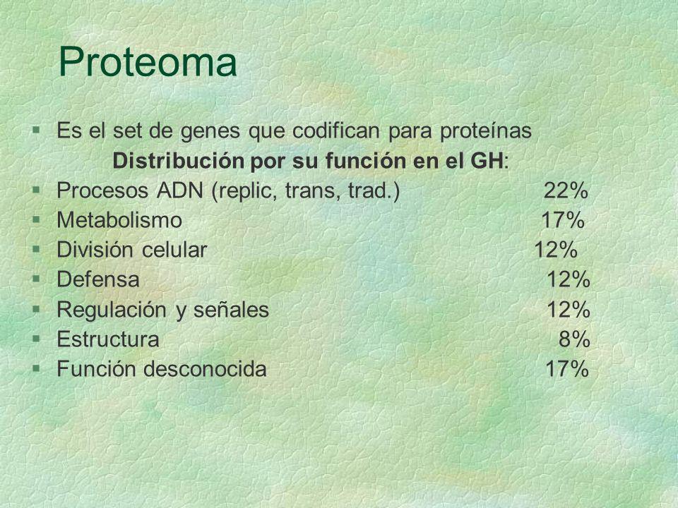 Proteoma §Es el set de genes que codifican para proteínas Distribución por su función en el GH: §Procesos ADN (replic, trans, trad.) 22% §Metabolismo