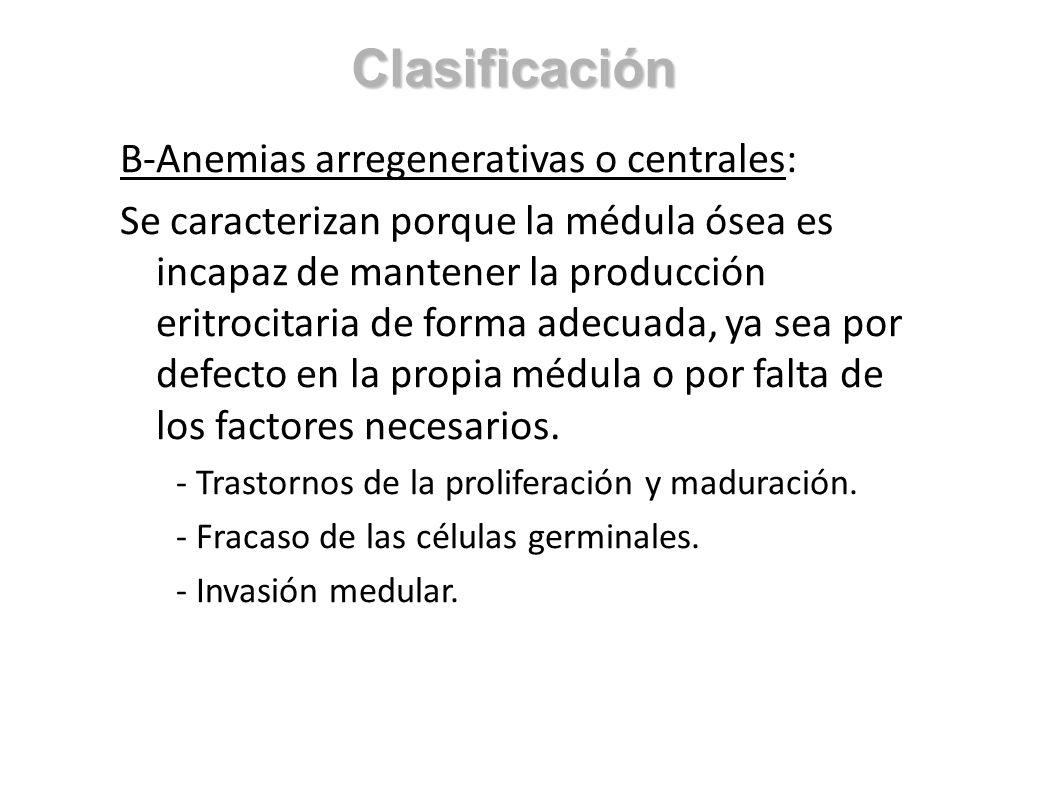 B-Anemias arregenerativas o centrales: Se caracterizan porque la médula ósea es incapaz de mantener la producción eritrocitaria de forma adecuada, ya