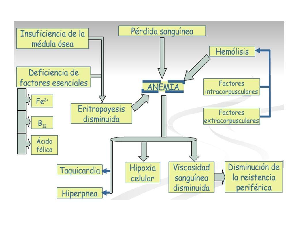 leucocitosis Incremento en el número de leucocitos en la sangre.