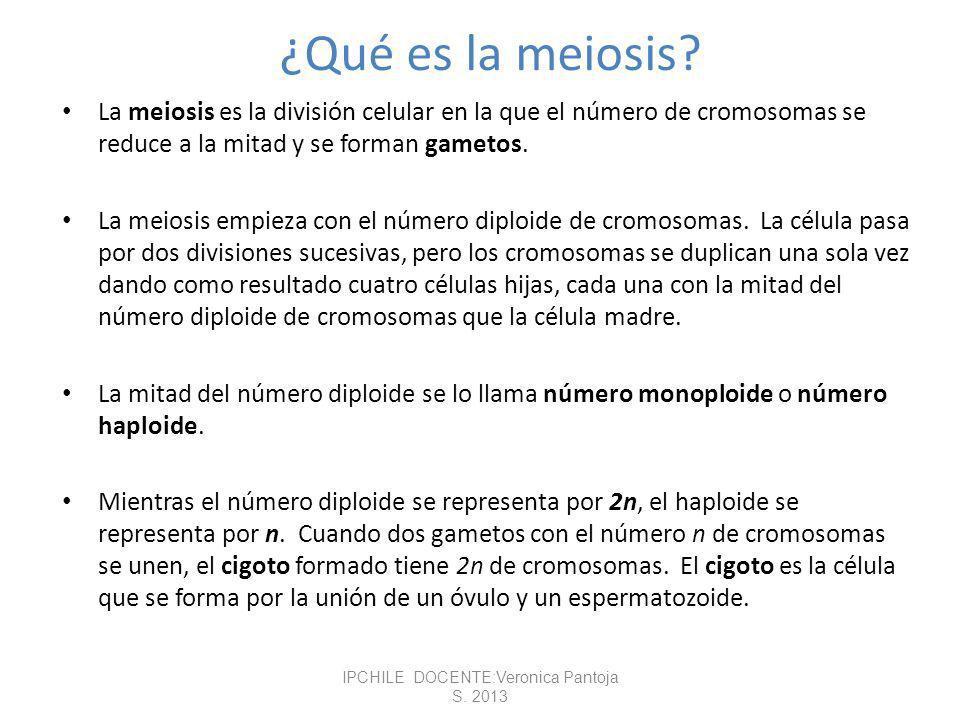 Gametogénesis IPCHILE DOCENTE:Veronica Pantoja S. 2013 Síntesis: