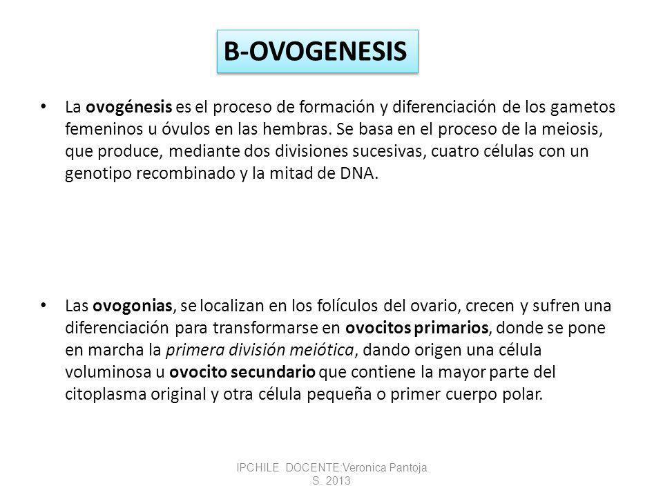 La ovogénesis es el proceso de formación y diferenciación de los gametos femeninos u óvulos en las hembras.
