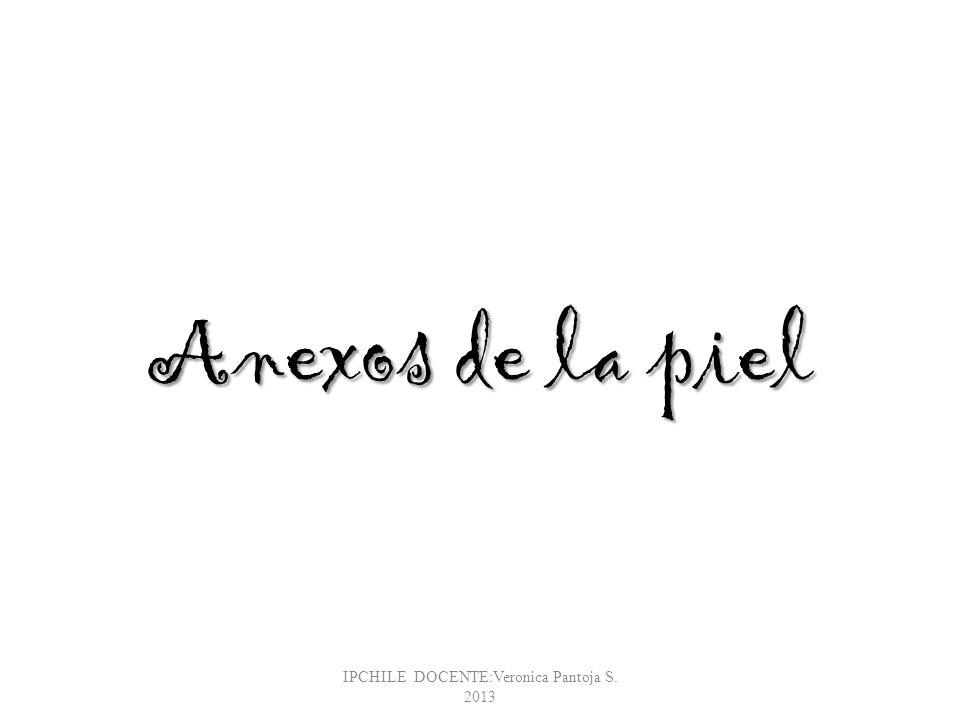 Anexos de la piel IPCHILE DOCENTE:Veronica Pantoja S. 2013