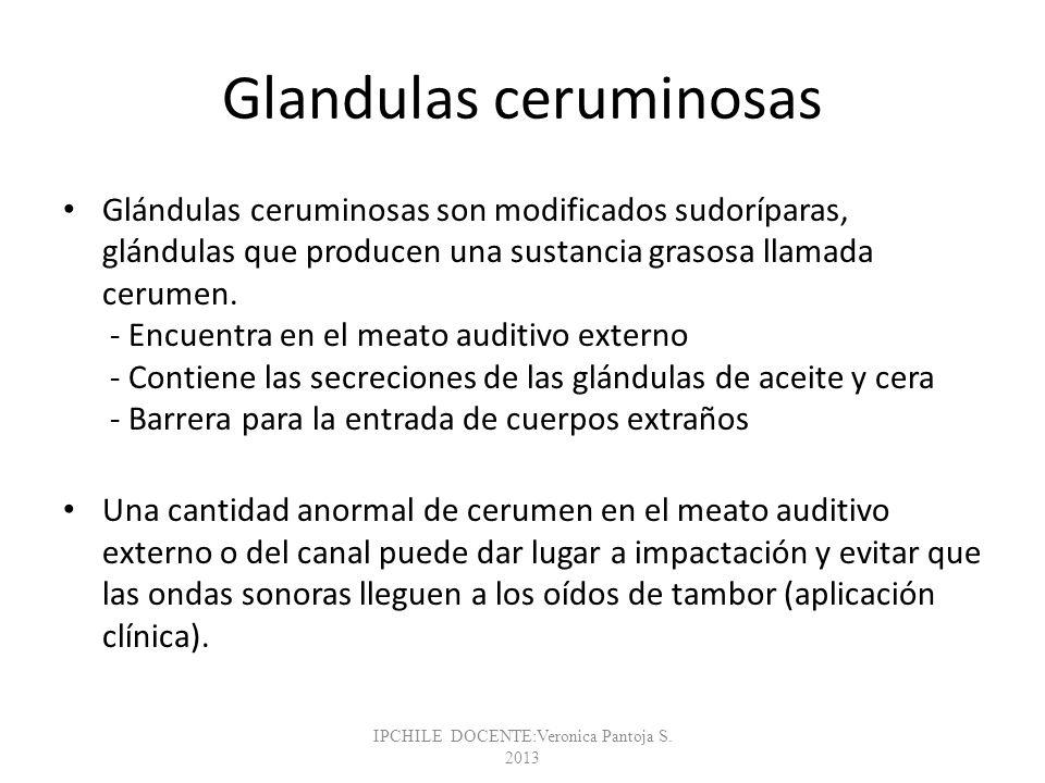 Glandulas ceruminosas Glándulas ceruminosas son modificados sudoríparas, glándulas que producen una sustancia grasosa llamada cerumen. - Encuentra en