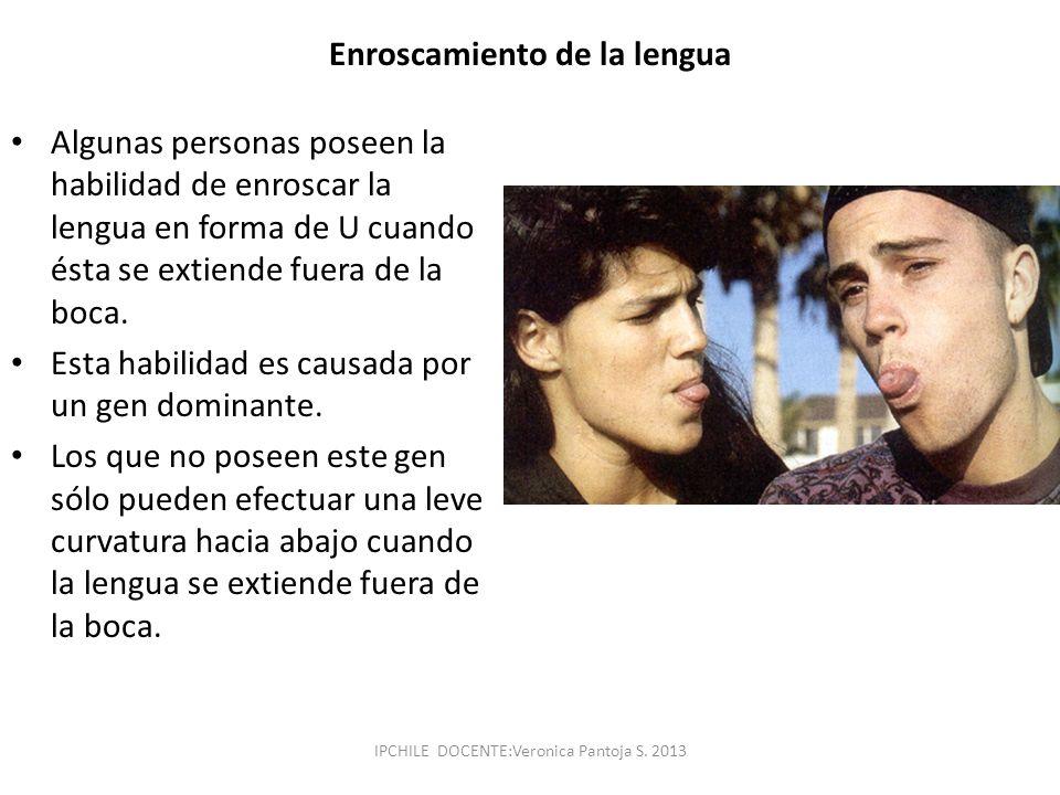 Enroscamiento de la lengua Algunas personas poseen la habilidad de enroscar la lengua en forma de U cuando ésta se extiende fuera de la boca. Esta hab