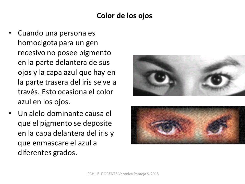 Color de los ojos Cuando una persona es homocigota para un gen recesivo no posee pigmento en la parte delantera de sus ojos y la capa azul que hay en