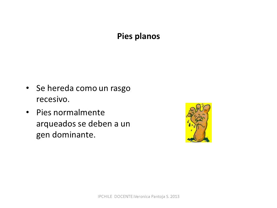 Pies planos Se hereda como un rasgo recesivo. Pies normalmente arqueados se deben a un gen dominante. IPCHILE DOCENTE:Veronica Pantoja S. 2013