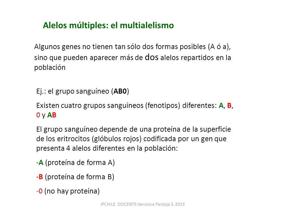 Alelos múltiples: el multialelismo Algunos genes no tienen tan sólo dos formas posibles (A ó a), sino que pueden aparecer más de dos alelos repartidos
