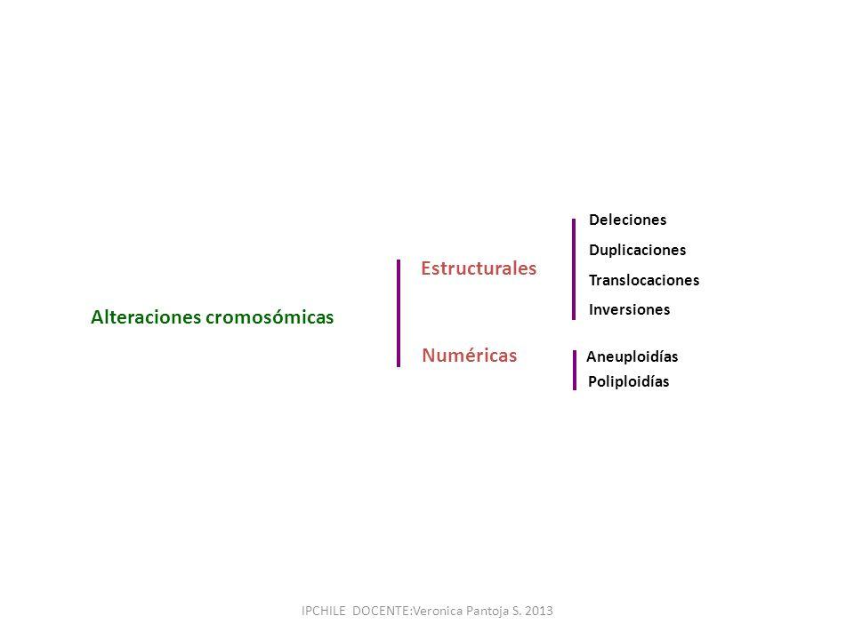 Alteraciones cromosómicas Estructurales Numéricas Deleciones Duplicaciones Translocaciones Inversiones Aneuploidías Poliploidías IPCHILE DOCENTE:Veron