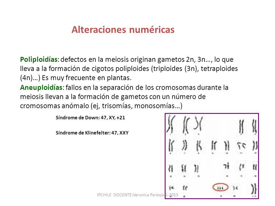 Alteraciones numéricas Poliploidías: defectos en la meiosis originan gametos 2n, 3n…, lo que lleva a la formación de cigotos poliploides (triploides (