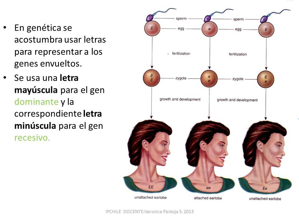En genética se acostumbra usar letras para representar a los genes envueltos. Se usa una letra mayúscula para el gen dominante y la correspondiente le