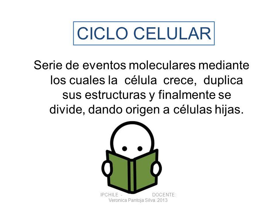 Serie de eventos moleculares mediante los cuales la célula crece, duplica sus estructuras y finalmente se divide, dando origen a células hijas. CICLO
