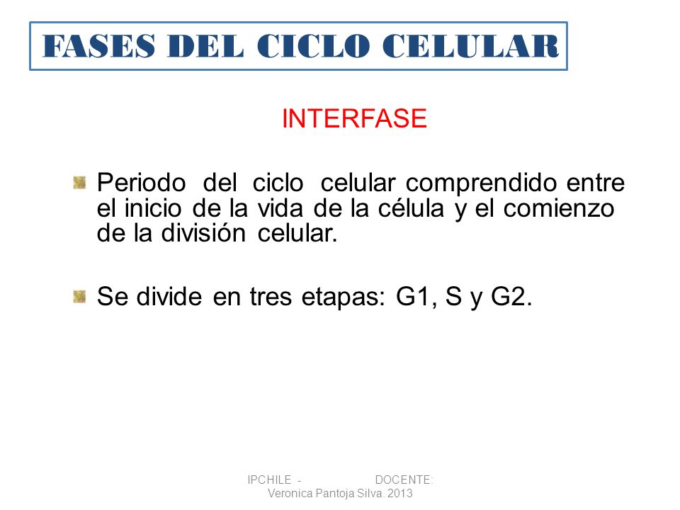 INTERFASE Periodo del ciclo celular comprendido entre el inicio de la vida de la célula y el comienzo de la división celular. Se divide en tres etapas
