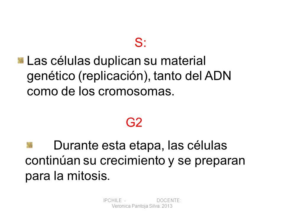 S: Las células duplican su material genético (replicación), tanto del ADN como de los cromosomas. G2 Durante esta etapa, las células continúan su crec