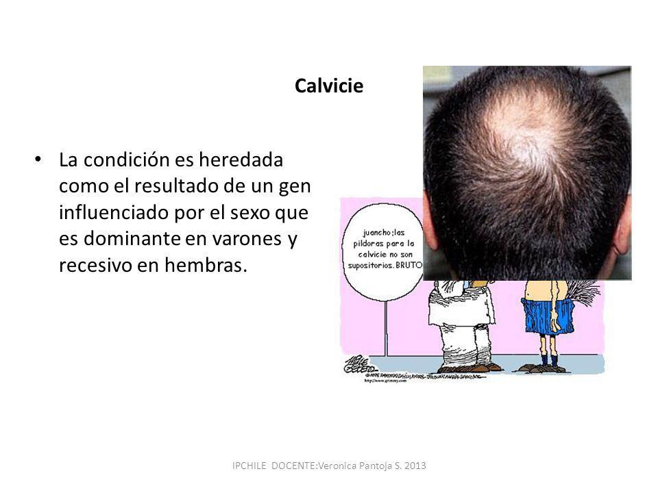 Calvicie La condición es heredada como el resultado de un gen influenciado por el sexo que es dominante en varones y recesivo en hembras. IPCHILE DOCE