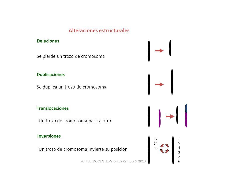 Deleciones Se pierde un trozo de cromosoma Duplicaciones Se duplica un trozo de cromosoma Translocaciones Un trozo de cromosoma pasa a otro Inversione