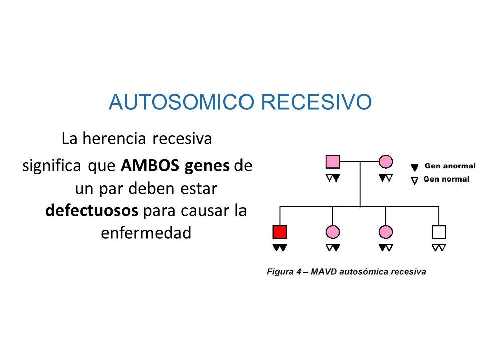 La herencia recesiva significa que AMBOS genes de un par deben estar defectuosos para causar la enfermedad AUTOSOMICO RECESIVO