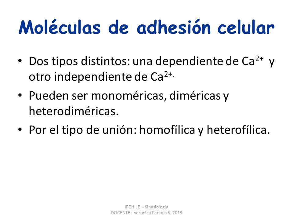 Moléculas de adhesión celular Dos tipos distintos: una dependiente de Ca 2+ y otro independiente de Ca 2+.