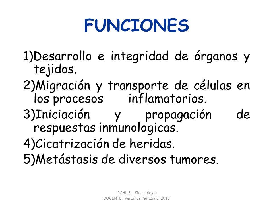 FUNCIONES 1)Desarrollo e integridad de órganos y tejidos.
