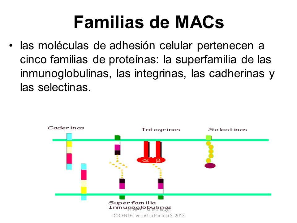 Familias de MACs las moléculas de adhesión celular pertenecen a cinco familias de proteínas: la superfamilia de las inmunoglobulinas, las integrinas, las cadherinas y las selectinas.