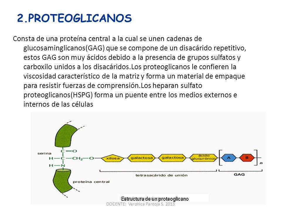 Las CADHERINAS :Son moléculas monoméricas, que constituyen receptores homofílicos que se unen a cadherinas idénticas expresadas en células horno o heterotípicas para establecer contacto célula-célula Su acción es calcio y temperatura dependiente.