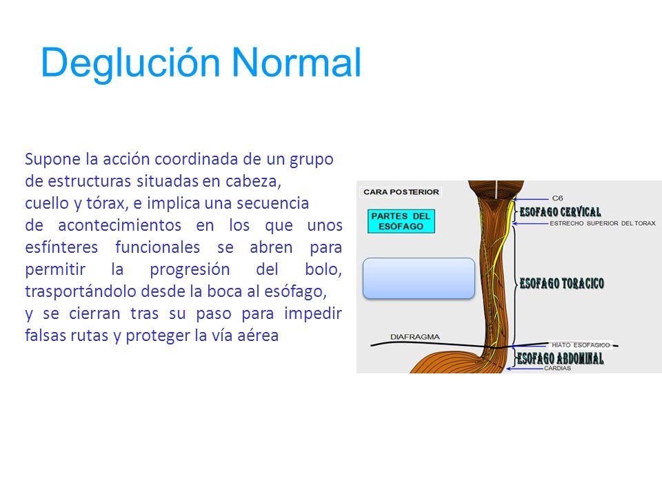 Deglución Normal Deglución Supone la acción coordinada de un grupo de estructuras situadas en cabeza, cuello y tórax, e implica una secuencia de acont