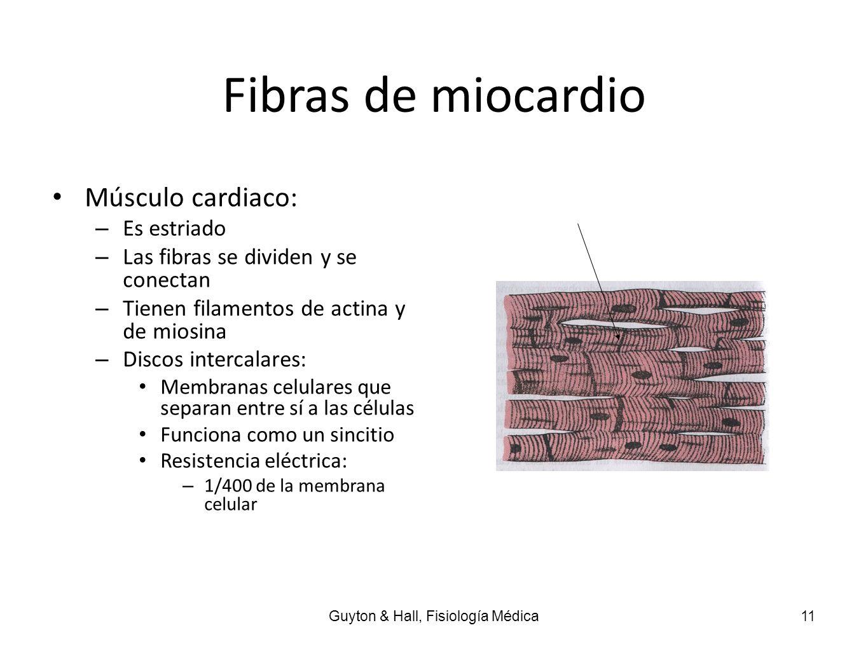 Fibras de miocardio Músculo cardiaco: – Es estriado – Las fibras se dividen y se conectan – Tienen filamentos de actina y de miosina – Discos intercal