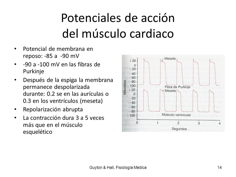 Potenciales de acción del músculo cardiaco Potencial de membrana en reposo: -85 a -90 mV -90 a -100 mV en las fibras de Purkinje Después de la espiga