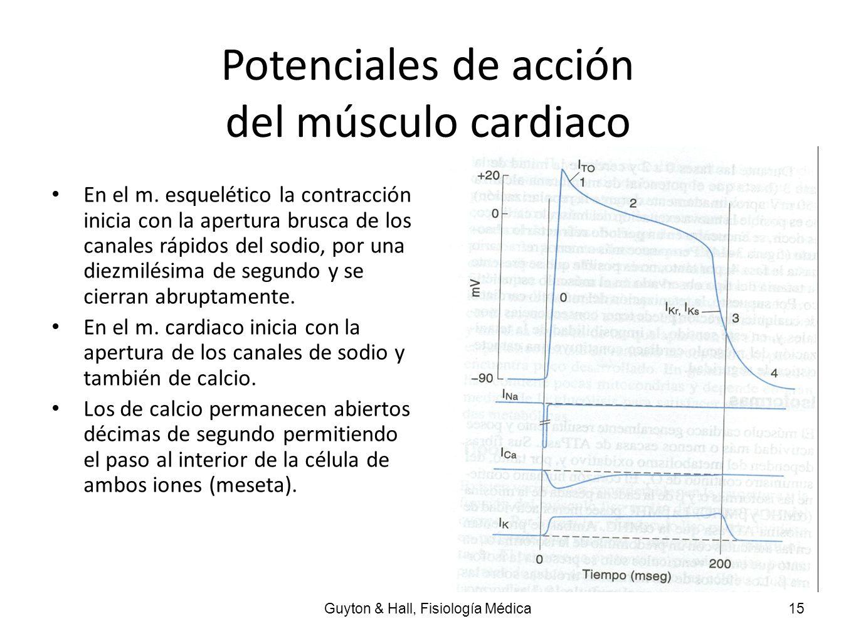 Potenciales de acción del músculo cardiaco En el m. esquelético la contracción inicia con la apertura brusca de los canales rápidos del sodio, por una