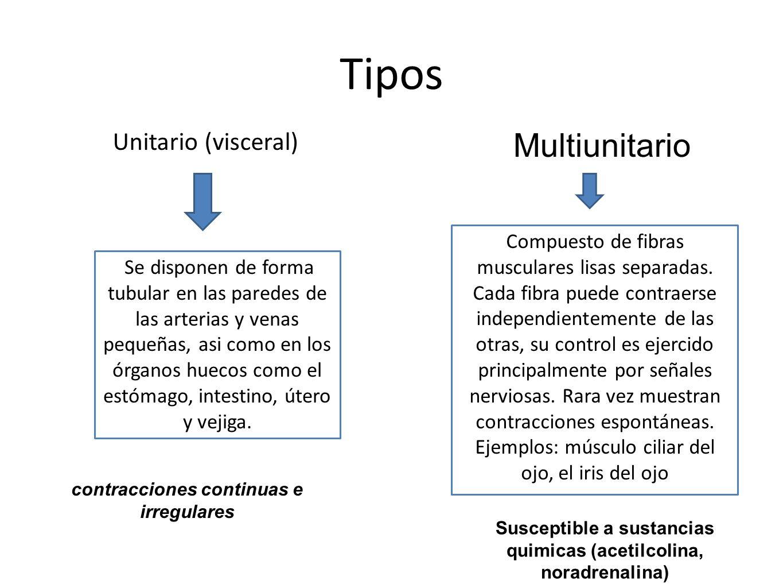 Tipos Unitario (visceral) Compuesto de fibras musculares lisas separadas. Cada fibra puede contraerse independientemente de las otras, su control es e