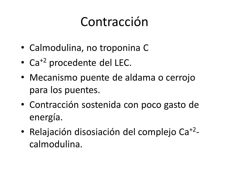Contracción Calmodulina, no troponina C Ca +2 procedente del LEC. Mecanismo puente de aldama o cerrojo para los puentes. Contracción sostenida con poc