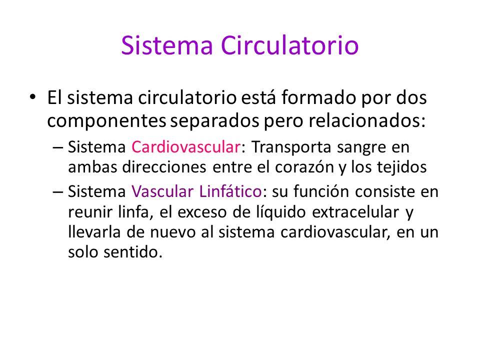 Sistema Circulatorio El sistema circulatorio está formado por dos componentes separados pero relacionados: – Sistema Cardiovascular: Transporta sangre