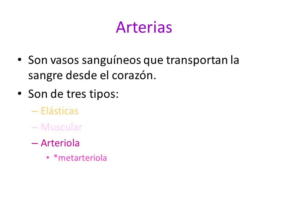 Arterias Son vasos sanguíneos que transportan la sangre desde el corazón. Son de tres tipos: – Elásticas – Muscular – Arteriola *metarteriola