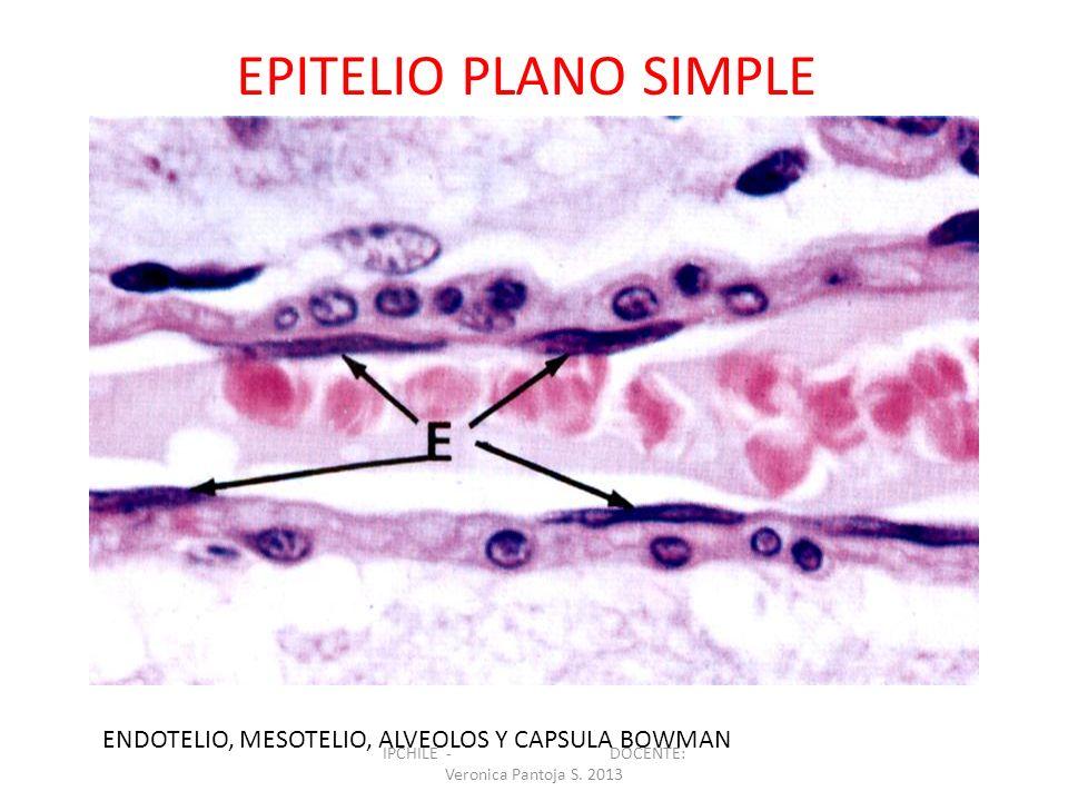 ENDOTELIO, MESOTELIO, ALVEOLOS Y CAPSULA BOWMAN EPITELIO PLANO SIMPLE IPCHILE - DOCENTE: Veronica Pantoja S. 2013