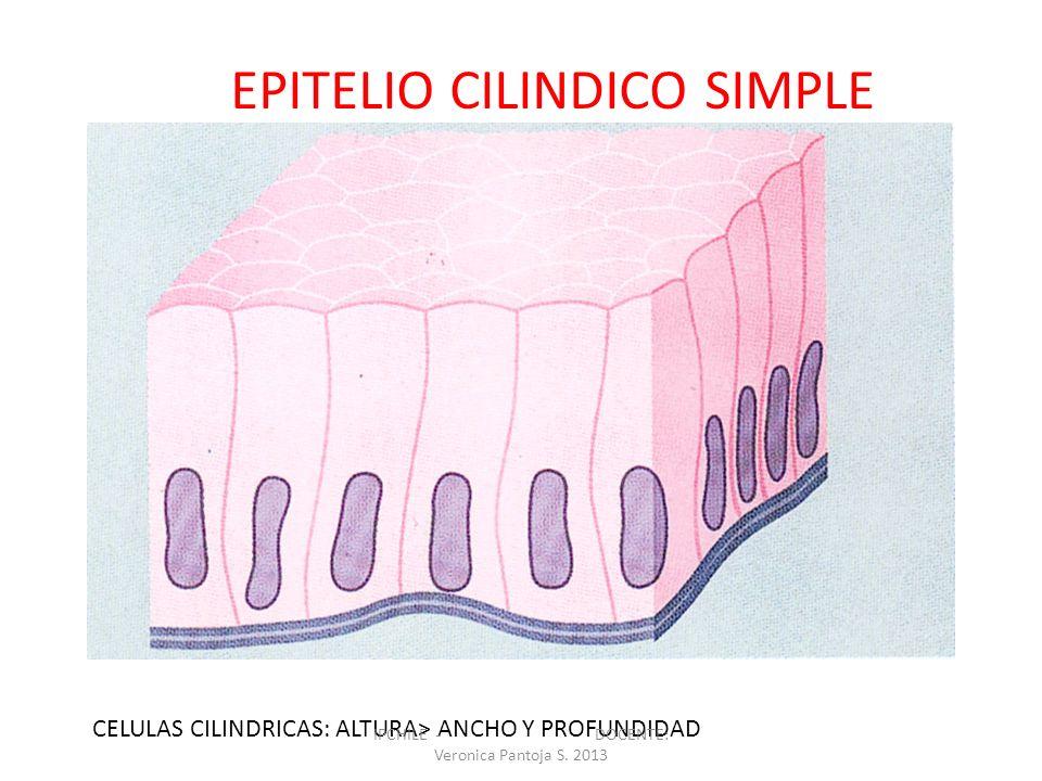 EPITELIO CILINDICO SIMPLE CELULAS CILINDRICAS: ALTURA> ANCHO Y PROFUNDIDAD IPCHILE - DOCENTE: Veronica Pantoja S. 2013