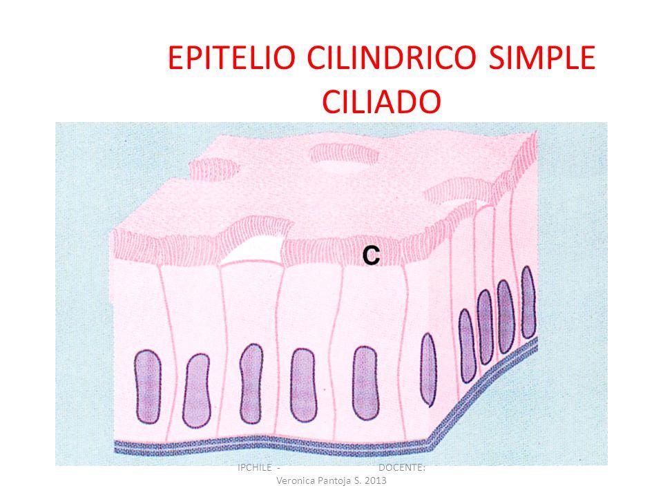 EPITELIO CILINDRICO SIMPLE CILIADO IPCHILE - DOCENTE: Veronica Pantoja S. 2013