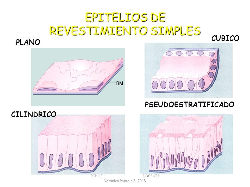 EPITELIOS DE REVESTIMIENTO SIMPLES PLANO CUBICO CILINDRICO CILINDRICO PSEUDOESTRATIFICADO IPCHILE - DOCENTE: Veronica Pantoja S. 2013